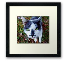 Green Eyed Pussy Cat Framed Print
