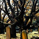 Cemetery Trees by Jason Dymock