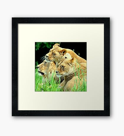 Three is a magic number Framed Print