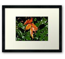Holly - Multnomah Falls, OR Framed Print