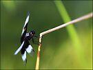 Lensbaby Dragonfly by Scott Lebredo