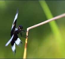 Lensbaby Dragonfly by Scott Lebredo