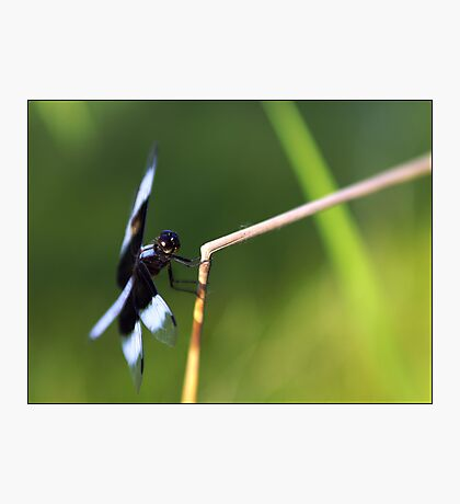 Lensbaby Dragonfly Photographic Print