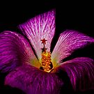Little Star Flower by Jason Dymock Photography