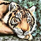 Tiger by Walter Colvin