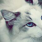 Ol Blue Eyes by chloemay