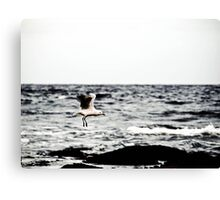 Coming in for Landing Canvas Print