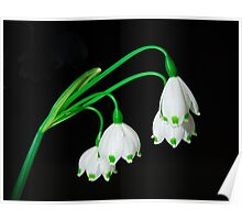 Snow Bell Flowers Poster