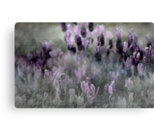 I love Lavender Dreams Canvas Print