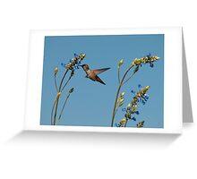 Hummingbird & Bog Sage Greeting Card