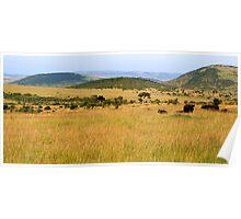 Masai Mara, Kenya Poster