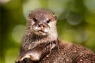 Otter, London Zoo by LudaNayvelt
