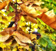 Fall Leaves 3 by rocamiadesign