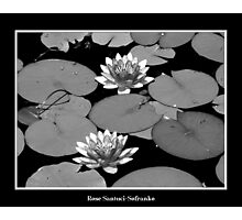 Waterlilies in Black and White Photographic Print