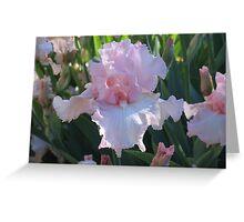 Delicate Pink Iris Greeting Card