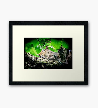 Little Sweetie ©  Framed Print