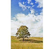 Once upon a Hillside Photographic Print