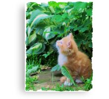 Keep Looking Up, Kitty! Canvas Print