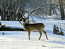 Deer on a Winter Walk by Barberelli