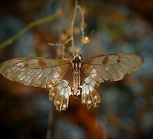 Delicate Butterfly by Melissa-Louise