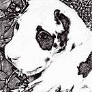 Little Black and White Puppy by the57man