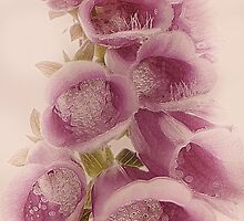 Digitalis by Yool