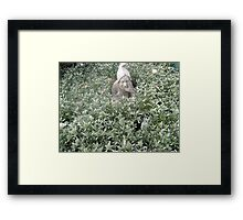 Ooww  Which way home .   Show me the way to go home .! ! Framed Print