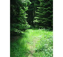 Woodland Glade. Photographic Print