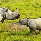 India Kaziranga National Park by Marieseyes