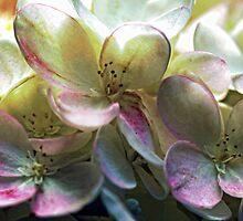 Hydrangea Blossoms by T.J. Martin