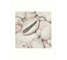 Pebbles, Cowrie & Abalone Shells Art Print