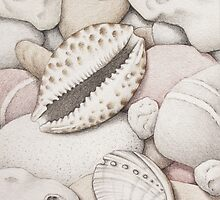 Pebbles, Cowrie & Abalone Shells by Fiona Cross