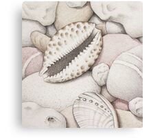 Pebbles, Cowrie & Abalone Shells Canvas Print