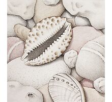 Pebbles, Cowrie & Abalone Shells Photographic Print