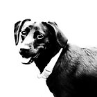 Dog Portrait by Ticker
