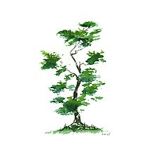 Little Zen Tree 271 Photographic Print