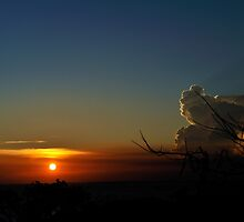 Poinciana tree silhouetted against setting sun. Vietnam by Sheldon Levis