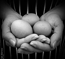 Fresh Eggs by synergymono