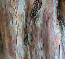 yew tree by lukasdf