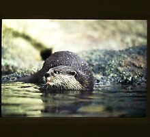 Otter by Victoria McGuire