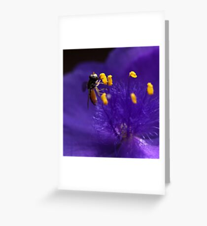 Syrphid Fly On Common Spiderwort Greeting Card