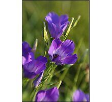 Wildflower Purple Photographic Print