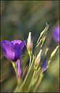 Ready to Bloom by Scott Lebredo