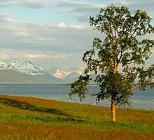 Summer tree by Frank Olsen