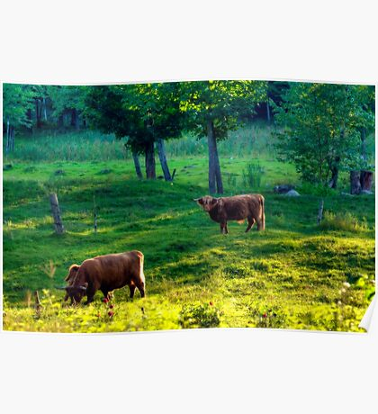 Out in the Pasture Poster