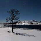Winter tree-IV by Frank Olsen