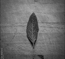 Sage Leaf by synergymono