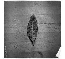 Sage Leaf Poster