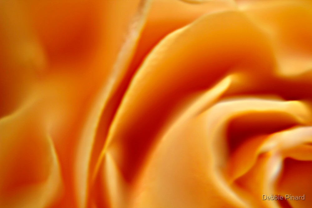 Yellow Rose Macro by Debbie Pinard