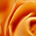 Yellow Rose Macro by Debbie Pinard